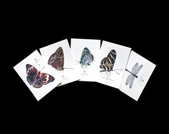Entomology Art Prints - Set of five