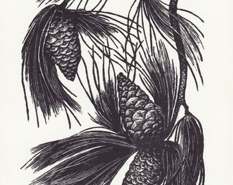 Untitled (pine cones)