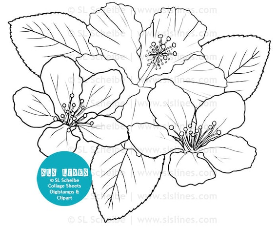 Digistamp flowers hibiscus coloring page digital stamp flower for Hibiscus flower coloring page