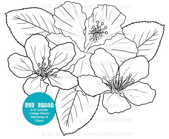 digistamp flowers hibiscus coloring page digital stamp flower adult colouring from slslines on etsy studio