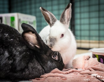 Wally & Poppy Bunnies, Farm Animal Rescue Rabbit Portrait Photography