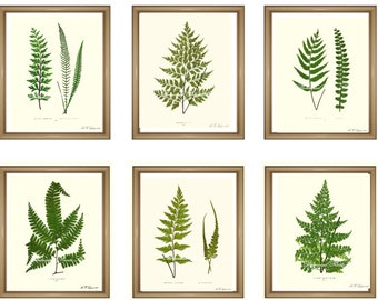"Fern Prints Set. ANY 6 fern prints. Fern Wall Art Set. Fern print set.  8x10"" 11x14"""