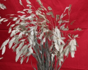 Elegant Dried Sea Oats (Medium)