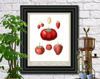 Strawberry Botanical Print Vintage Strawberries Illustration Kitchen Wall Art Poster  0472