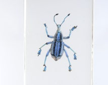 Taxidermy bug,Vintage paperweight resin bloc with real blue beetle, beetle taxidermy, insect taxidermy, beetle