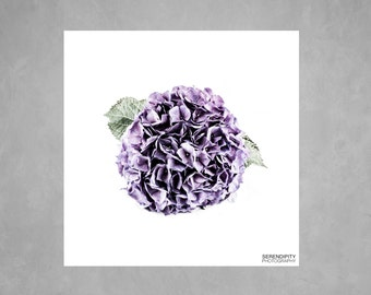Fine Art Print ~ Flower Photography ~ Hydrangea ~ Fine Art Photograph ~ Macro ~ Purple ~ Gift Wrap ~ Different Sizes