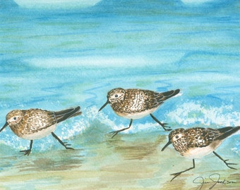 Sandpiper pictures--Run Forest Run!