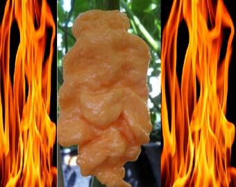 10 seeds Jays Peach Ghost Scorpion cross between Bhut jolokia & Scorpion pepper