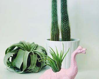 Small Pastel Pink Brachiosaurus Dinosaur Planter Air Plant; Dinosaur Planter; Planter; Desk Accessory; Home Decor; Unique Gift; Air Plant