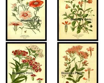 Set of 4 Flower prints. Catch Fly, Chinese Pink, Sweet William, and Drooping Catchfly.