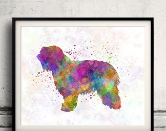 Catalonian Sheepdog 01 in watercolor - Fine Art Print Poster Decor Home Watercolor Illustration Dog - SKU 1488