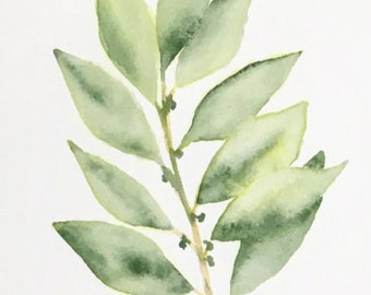 Watercolor botanical (bay leaf)  #1