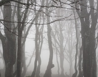 Forest Digital Photo - Forest - Forest Photography - Misty - Misty Photo - Landscape Photo - Digital Photo - Digital Download - Home Decor