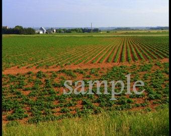Beautiful Canada - PEI potato fields