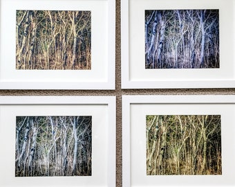 The Forest for the Trees  (set of four)