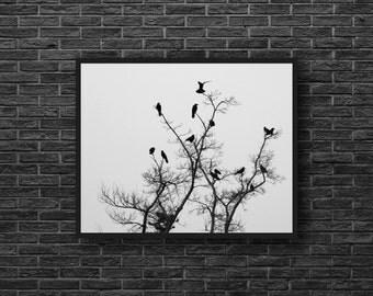 Crows Photo - Tree Photo - Birds Photo - Paper Photo Print - Nature Print - Black and White - Wall Art - Wall Decor - Living Room Decor