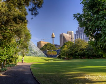 Sydney's Centrepoint Tower - original photograph, digital download, landscape photo