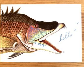 Big Fish postcards. Set of 4 postcards. Vintage illustration postcards.
