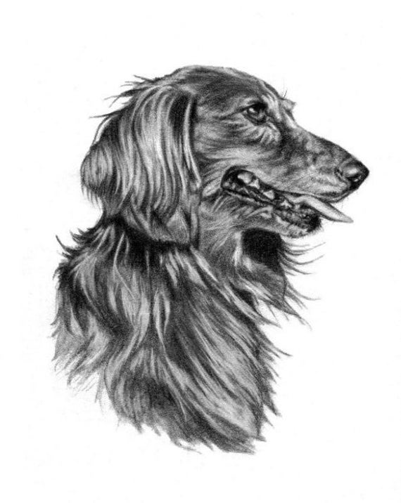 Dog Sketch Pet Portrait 8x10 Print