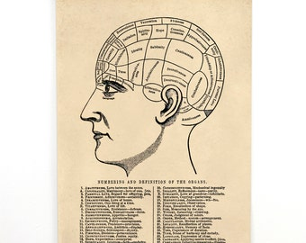 Pull Down Chart - Vintage Phrenology Diagram Reproduction. Hanging Canvas Print. Educational Human Anotomy Science Poster 0211