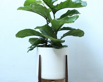 Modern Plant Stand Set / PEDESTAL / Walnut Stand and Planter / BLACK or WHITE Pot