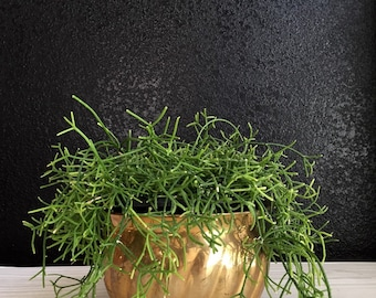 vintage spiral solid brass planter / flower pot