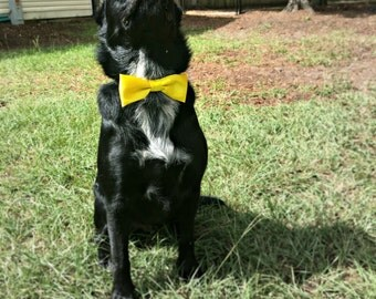 Satin Dog Collar Straight Bow Tie - Pet Accessory - Dog Wedding - Dog Accessories - Cat Acessories - Wedding Dog Bow Tie - Customize