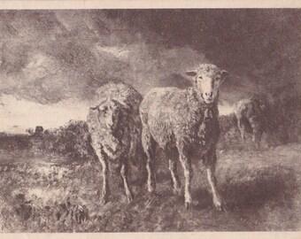 "C. Troyon ""Sheeps"" Postcard -- 1920s. Condition 8/10"
