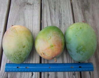 FRESH Keitt Mangoes