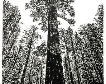 Sequoiadendron giganteum - Yosemite, Giant Sequoia Fine Art Linocut Print 24 x 18 Black & White, Relief Print, Anniversary Series, NPS