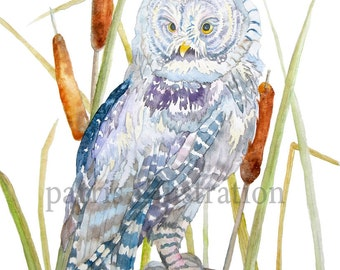 Great Gray Owl No.1, Archival Print of Original Watercolor, you choose size