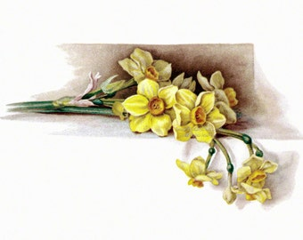 Daffodils Fabric Block | Floral Fabric | Vintage Style