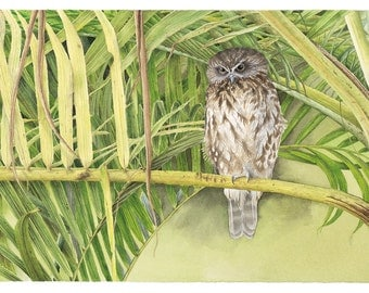 Boobook Owl Original Watercolour Painting Free Postage