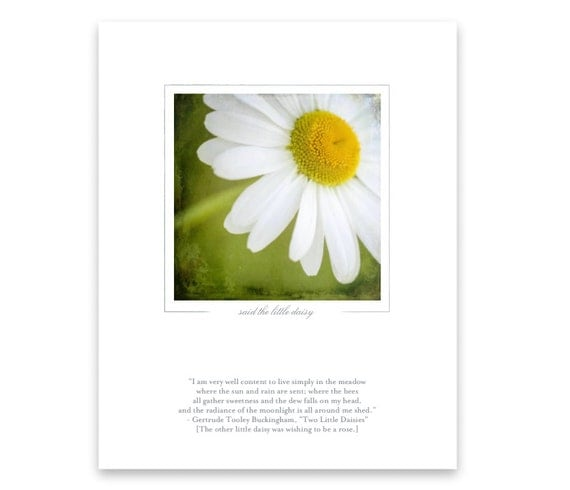 Flower Quote and Photo of White Daisy. Nature Photography. Macro Photo Art Print.