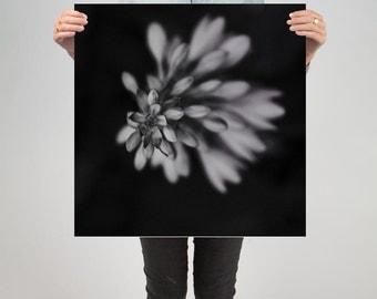 "Floral 3 ( 24"" X 24 "" Print )"