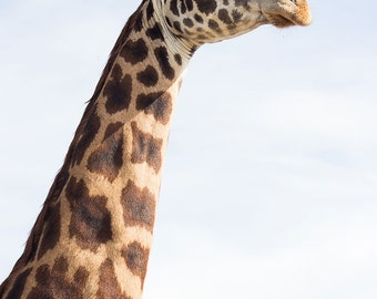 Giraffe, Africa, Travel, Photography
