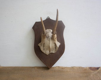 Vintage Mounted Antlers / Deer Antler / Antler Decor / Mounted Horns / Taxidermy