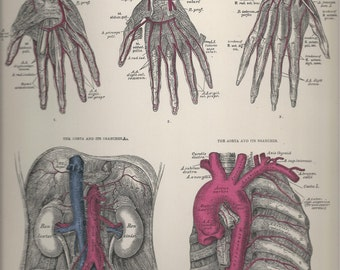 Dorsal Arteries of the Hand,  Anatomical Plate 63, Descriptive Atlas of Anatomy 1880