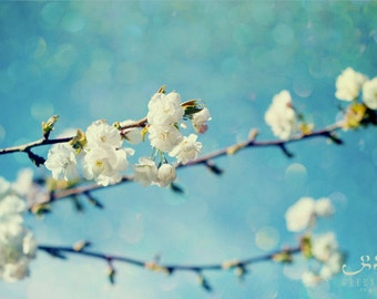 Glittering Sky and Blossoms - Photo Print, flower photography, spring, botanical, white blossoms, turquoise blue sky, texture photo art
