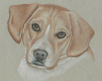 Custom Pet Portrait , Dog Portrait Drawing , Colored Pencil Pet Portrait