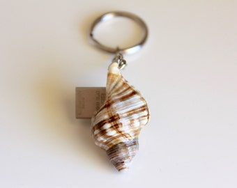 Beach Shell 16GB to 128GB USB 3 Flash Drive on Key Chain