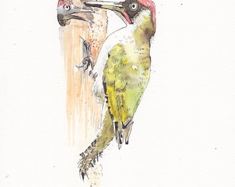 Green Woodpecker feeding it's young, daily Bird #39 - Original pen & ink drawing, watercolour painting - A4 gift, watercolor wood pecker