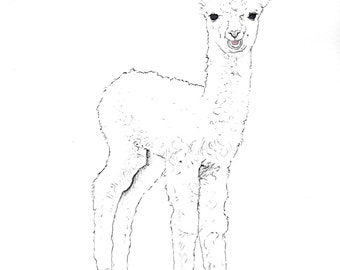 Original Watercolor Painting- Baby Alpaca- 8x10 inches
