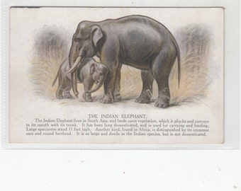 The Indian Elephant 1920s Artistic Postcard