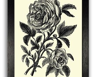 Black & White Rose Engraving Art Print, Rose Illustration Poster, Flower Decor, Simplistic Home Decor, Girls Room Wall Art, Flower Artwork