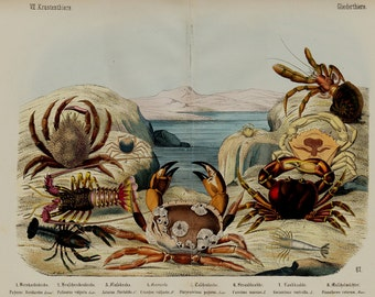 """1860 Rare Amazing Large antique CRUSTACEANS  print, fine lithograph, Crabs, lobster, original antique 156 years old, size 17'' x 13"""" inches"""