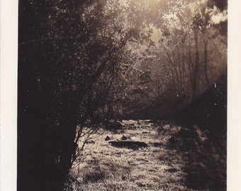 Beautiful Antique Snapshot Photo of The Sun Setting on the Woods