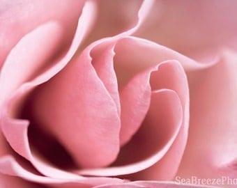 Pink rose printable photo, photography roses, digital download art, printable art, wall art decor, digital photography, instant download