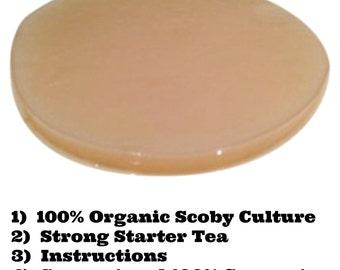 100% Organic Kombucha Scoby Starter Set (Includes: Culture/Mushroom, Strong Starter Tea & Instructions)
