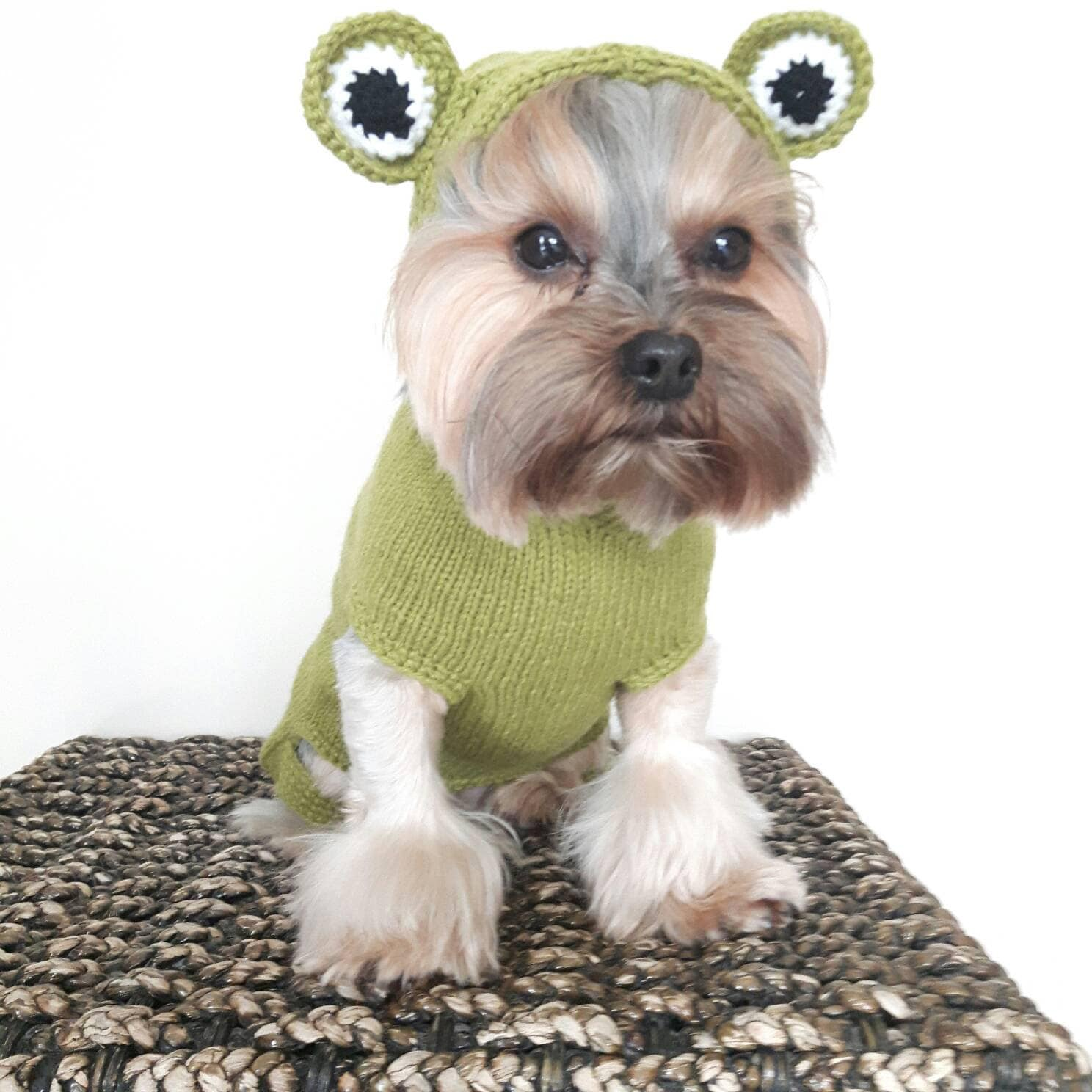 Knitted dog sweater frog dog sweater small dog sweater by - Knitting for dogs sweaters ...